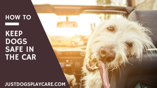 how to keep your dogs safe in the car