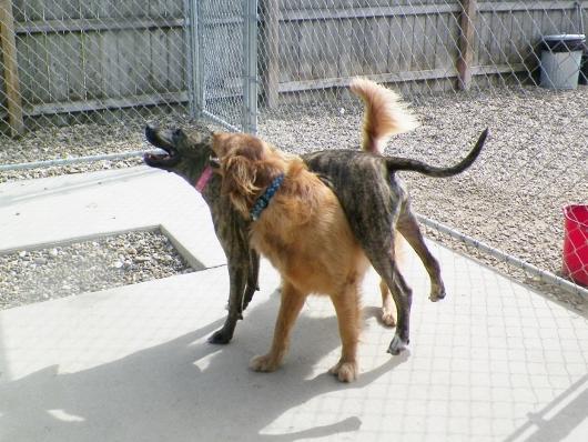 Dog Obedience Training Iowa City