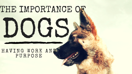 the importance of dogs having work and purpose
