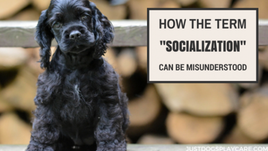 socialization for dogs