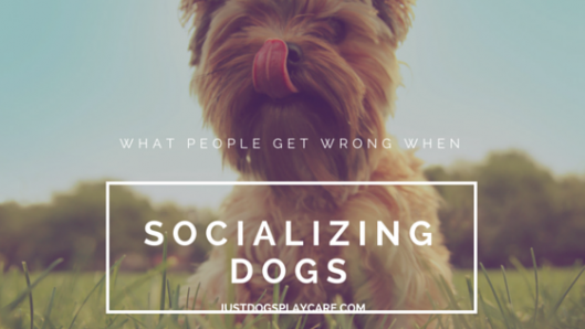 what people get wrong when socializing dogs