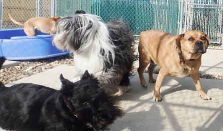 doggy daycare iowa city