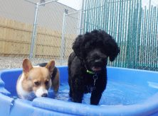 doggy daycare coralville