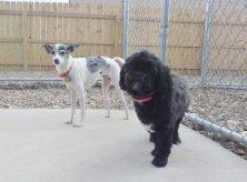 dog-kennel-coralville