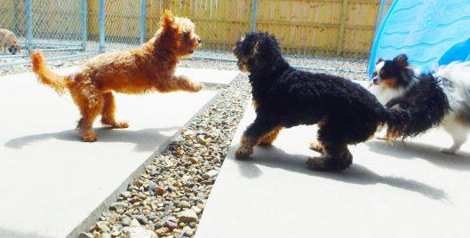 doggie daycare tiffin iowa
