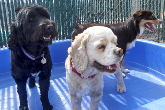 Photo Gallery - Just Dogs PlayCare